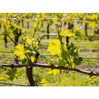 Le printemps est bientôt là ! Après avoir passé l'hiver au repos, la vigne renaît… et nous aussi 🙏 #aries #ariesvins #copainsdegrandscrus #vinsdebordeaux #grandscrus #wine #vin #bonsvins #adeguster #degustation #entreamis #degusteraveclescopains #unbonvinentrecopains #culturevin #bientotleprintemps #spring #vigne #vignoble #danslesvignes #vinblanc #vinrose #vinrouge #grandvindebordeaux