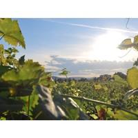 Grand soleil et ciel bleu, et si on optait pour une virée dans les vignes… 🍇 #aries #ariesvins #copainsdegrandscrus #vinsdebordeaux #grandscrus #wine #vin #bonsvins #adeguster #degustation #entreamis #degusteraveclescopains #unbonvinentrecopains #vignobles #vignes #soleil #cielbleu #nature #environnement #sun #vineyards #spring #grandvindebordeaux